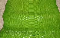 Питон натуральный Куртус лак зелёный, фото 1