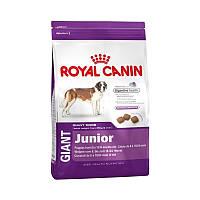 Сухой корм 15 кг для юниоров гигантских пород Роял Канин / GIANT JUNIOR Royal Canin