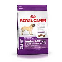Сухой корм 15 кг для щенков гигантских пород с активным образом жизни Роял Канин / GIANT JUNIOR ACTIVE Royal C