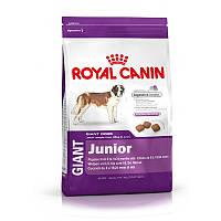 Сухой корм 4 кг для юниоров гигантских пород Роял Канин / GIANT JUNIOR Royal Canin