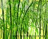 """Отдушка """"Бамбук"""", 100 мл. - Франция"""
