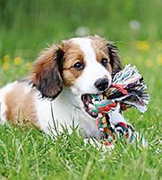 Канаты и игрушки на веревке для собак
