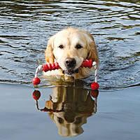 Игрушки для собак на воде
