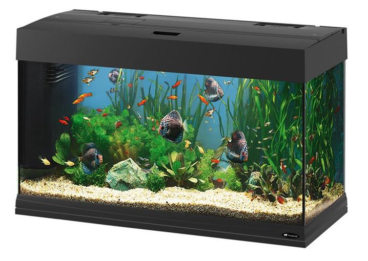 Оформление пресноводных аквариумов