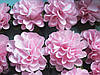 Бумажные цветочки хризантемы для скрапбукинга 4,5 см на ножке розовые