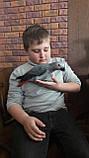 Жако пташенята (ручного докормления) 3,5 - 4 міс., фото 3