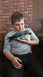 Жако птенцы (ручного докормления) 3,5 - 4 мес., фото 3