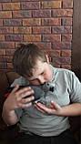 Жако пташенята (ручного докормления) 3,5 - 4 міс., фото 4