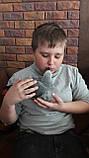 Жако птенцы (ручного докормления) 3,5 - 4 мес., фото 5