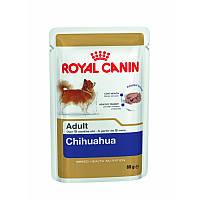 Консервы 85 г для породы Чихуахуа Роял Канин / CHIHUAHUA ADULT Royal Canin