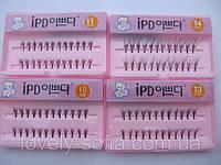Ресницы пучковые IPD 24 шт с клеем