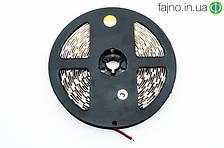 LED лента теплый белый SMD 5050 60 д/м, 5 м, IP20