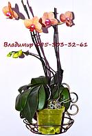 Ромашка, подставка для цветов на 1 чашу, фото 1