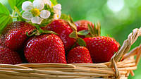Украинская клубника уверенно держит цену, не уступая импортным ягодам.