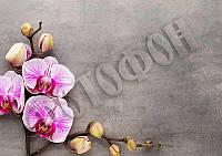 Фотофон от Decards - Орхидея на досках 1, A3+ (320x450 мм), 1 шт