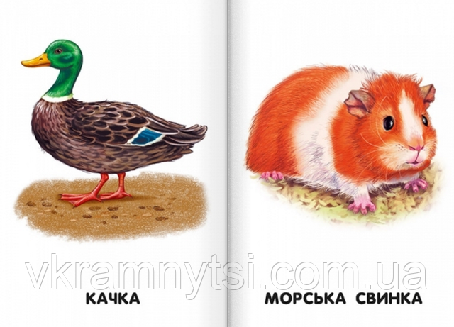 Свійські тварини. 22 картинки