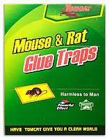 Клеевая ловушка от крыс и мышей зеленая большая  размер 16*21