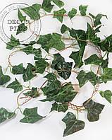 Лиана плющ зелёная