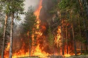 Ситуация с лесными пожарами в России продолжает ухудшаться