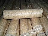 Паливні брикети з багаття льону, фото 2