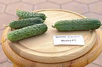 Насіння огірка Маша F1 (Masha F1) Seminis 1000 насінин, фото 1