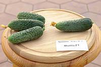 Насіння огірка Мадіта F1 (Madita F1) Seminis 250 насінин