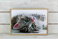 Поднос для еды котенок