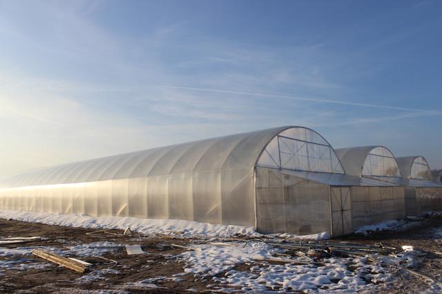 бизнес по выращиванию в теплицах