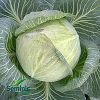 Капуста белокочанная Арривист F1 / Arrivist F1 от Семинис (Seminis), 2500 семян