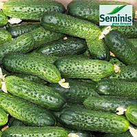Огурец Мирабелл F1 / Mirabelle F1 от Семинис (Seminis), 1000 семян