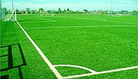 Семена газонных трав - Спортивный газон