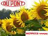 Гербицид Экспресс® - Дюпон 0,5 кг, водно-диспергируемые гранулы