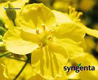 Семена рапса Гладиус от Сингента (Syngenta)