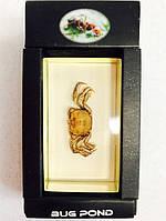 Оригинальный Сувенир Насекомое в Стекле Bug Pond Акрил