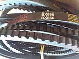 Ремінь зубчастий BX-850 Excellent (Ремінь на культиватор), фото 3