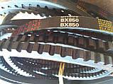 Ремінь зубчастий BX-850 Excellent (Ремінь на культиватор), фото 4