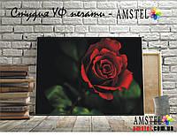 УФ печать на холсте, картинка красная роза