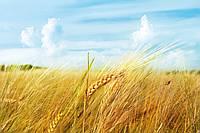Украинский флаг (поле и небо).
