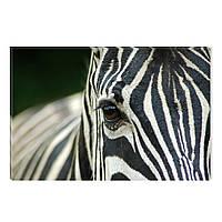 Светящиеся Картины Startonight Зебра Мир Животных Печать на Холсте Декор стен Дизайн Интерьер