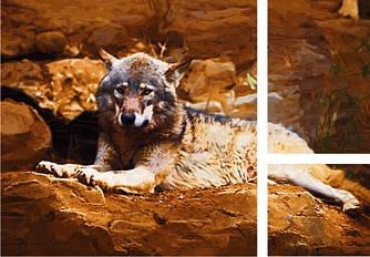 """Картина модульная """"Волк на камнях""""  (720х500 мм)  [3 модуля]"""