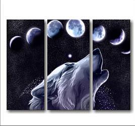 """Модульная картина """"Волк и звездное небо""""  (820х600 мм)  [3 модуля]"""