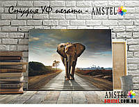 Картина Слон Печать на Холсте, размер 30 на 40 см