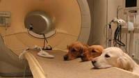Шведские собаки станут онкологами