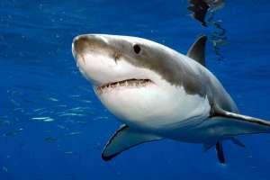 Американец поймал на удочку гигантскую акулу и накормил ею около 200 соседей