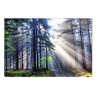 Светящиеся Картины Startonight Утро в Лесу Природа Пейзаж Печать на Холсте Декор стен Дизайн Интерьер