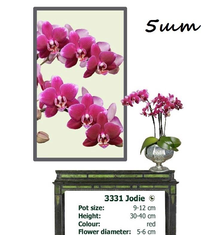 Подростки орхидеи купить