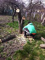 Спил деревьев бензопилой. Обрезка, спил деревьев в Киеве.