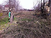 Удаление деревьев в Киеве.