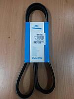 """Поликлиновой (ручейковый) ремень на Renault Kangoo 1.9, Clio II 1.9 """"DAYCO"""" ― производства Италии"""