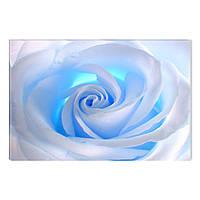 Светящиеся Картины Startonight Белая Роза Абстракция Цвпеты Печать на Холсте Декор стен Дизайн Интерьер